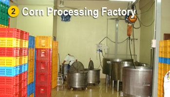 Sweet Corn Procesing Factory