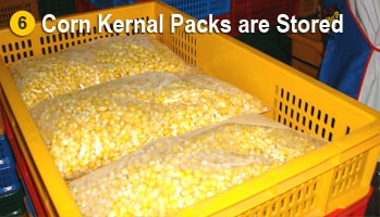 Swet Corn Kernel Packs Storahe